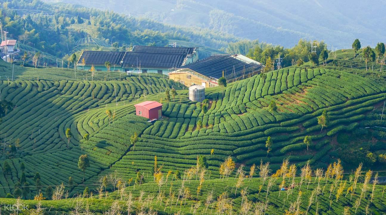 走入「八卦茶园」可以眺览附近的茶园风光及北势溪的风景,附近的山坡